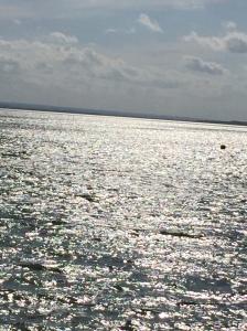 19 Silver Sea