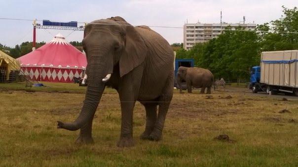 Elephants in Town